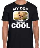 Honden liefhebber shirt chihuahua my dog is serious cool zwart voor heren 10246376
